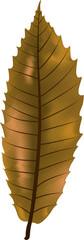 Feuille châtaignier marron illustration 4
