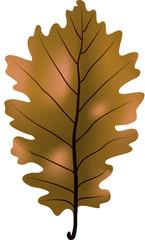 Feuille chêne marron illustration 4