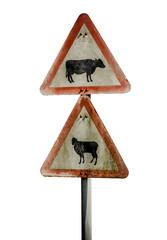 Grungy UK Cattle Warning Sign