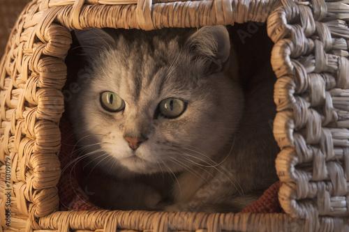 猫ちぐらの中の猫