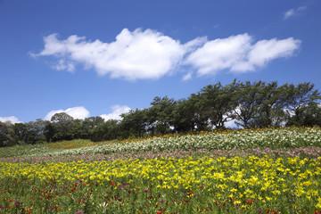 ゆり園の青い空