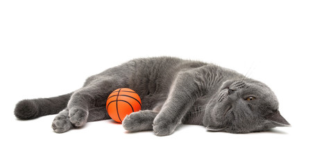 gray cat with a ball on a white background