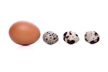 An egg and quail eggs in row, isolated with white background.