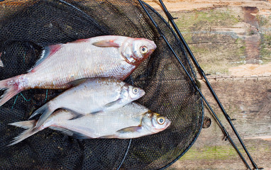 fresh fish in the nets on a wooden background
