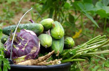 Vegetables in buckets