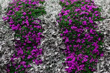Flowery Wall
