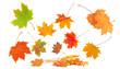 Herbstlaub auf weiß