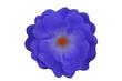 canvas print picture - Blaue Blume
