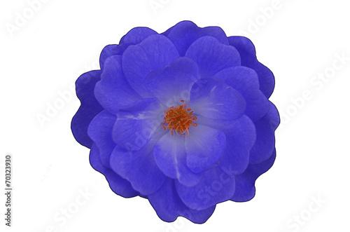 canvas print picture Blaue Blume