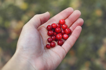 Cranberries in a hand