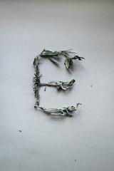 Mint letter E