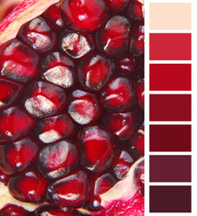 color chart red selection for interior