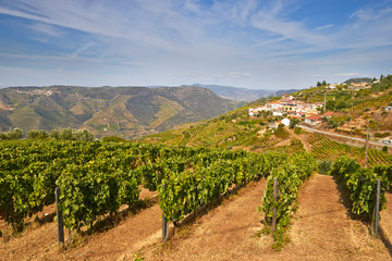 vine cultures in the Douro region, Portugal