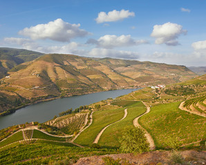 Beautiful Vineyards in Douro Valley, Portugal