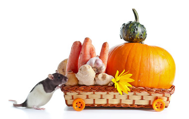 rat and vegetables on white background