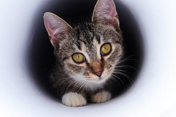 kitten in tunnel
