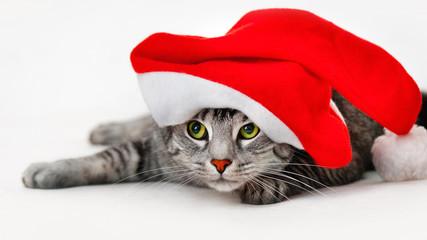 Katze unter weihnachtsmütze