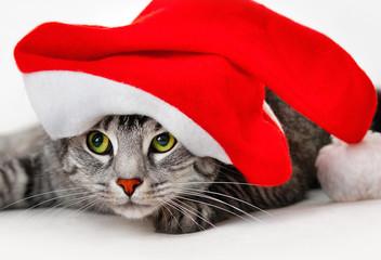 Katze unter der nikolausmütze