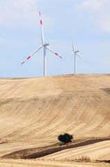 Mulini a vento in campi coltivati