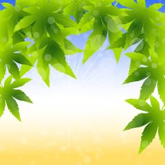 frühling,grün,gelb,abstrakt,ahornblätter,herbst,blase