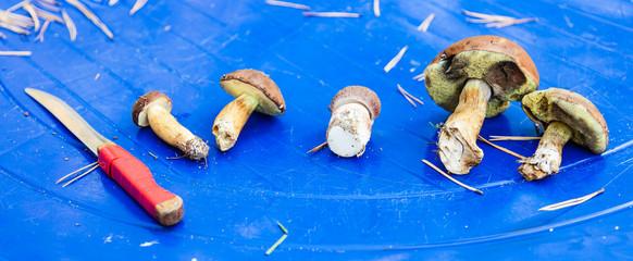 Mushrooms on table