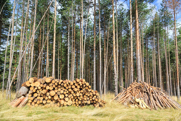 stacked firewood in the forest before the winter season