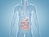 Magen-Darm-Trakt - anatomische 3D-Illustration - 70342532