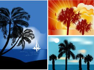 set of palm trees near sea