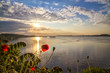 Poppies on the Danube - 70344967