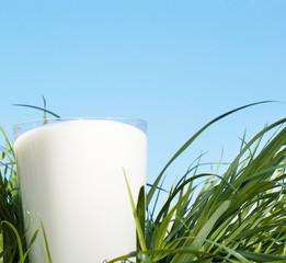 Glass fresh milk
