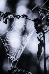 Spiderweb in forest in black and white