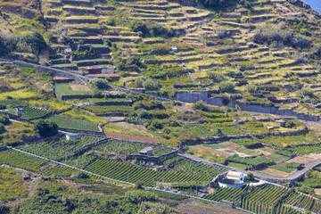Landwirtschaft auf der Insel Madeira, Portugal
