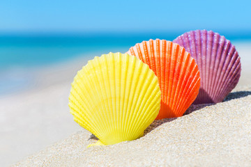 Three colorful scallop seashells on sandy tropical beach