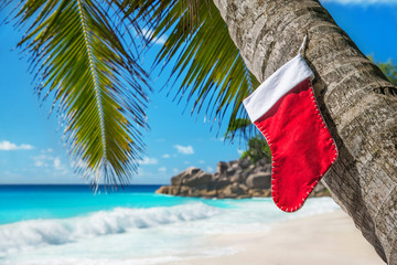 Christmas sock on palm tree at exotic tropical beach