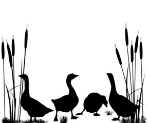 Goose and ducks silhouettes