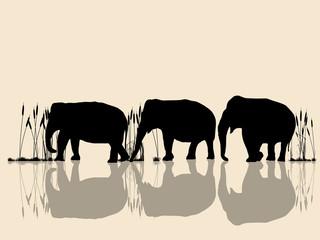 Elephants crossing water