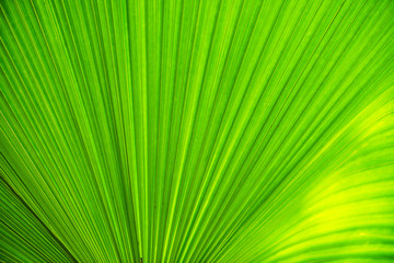 Texture of green leave for your background