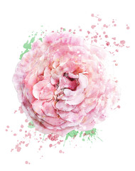 Watercolor Image Of Rose