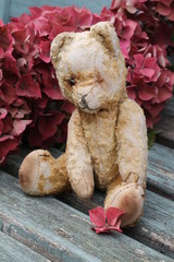 Vintage teddy bear and hydrangea