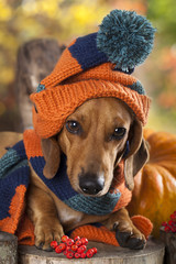 dog knitted hat and scarf