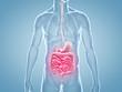 Leinwanddruck Bild - Magen-Darm Schmerzen - anatomische 3D-Illustration