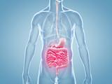 Magen-Darm Schmerzen - anatomische 3D-Illustration