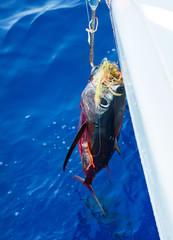 Frischer Thunfisch am Haken beim Segeln