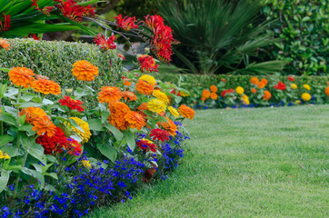 Colorful Garden Detail