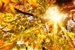 Obrazy na płótnie, fototapety, zdjęcia, fotoobrazy drukowane : Herbstsonne strahlt durch Buchenblätter