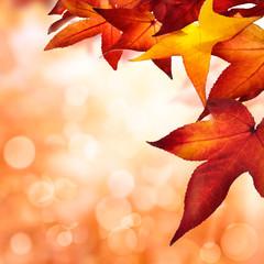 Herbst Hintergrund, quadratisch