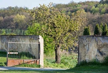 Spreading tree and metal gate