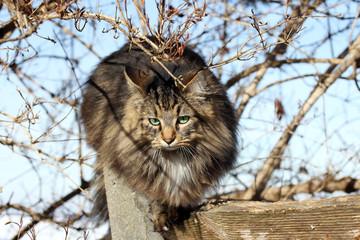 Katzen klettern gern
