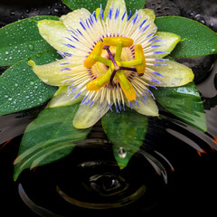 spa still life of passiflora flower, green leaf with drop, towel