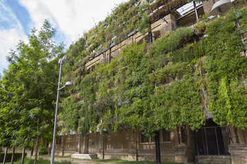 Green wall in an sustainable building